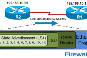 Analysis of OSPF Link State Update (LSU) - Link State Advertisement (LSA) Packet Structure. Common LSA Types